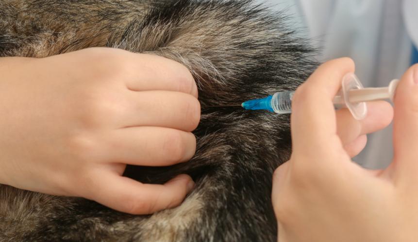 Vigilância Ambiental de Araxá estende vacinação antirrábica e oito pontos fazem atendimento no domingo